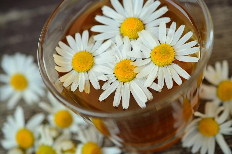 Чай из ромашки обладет многими полезными свойствами