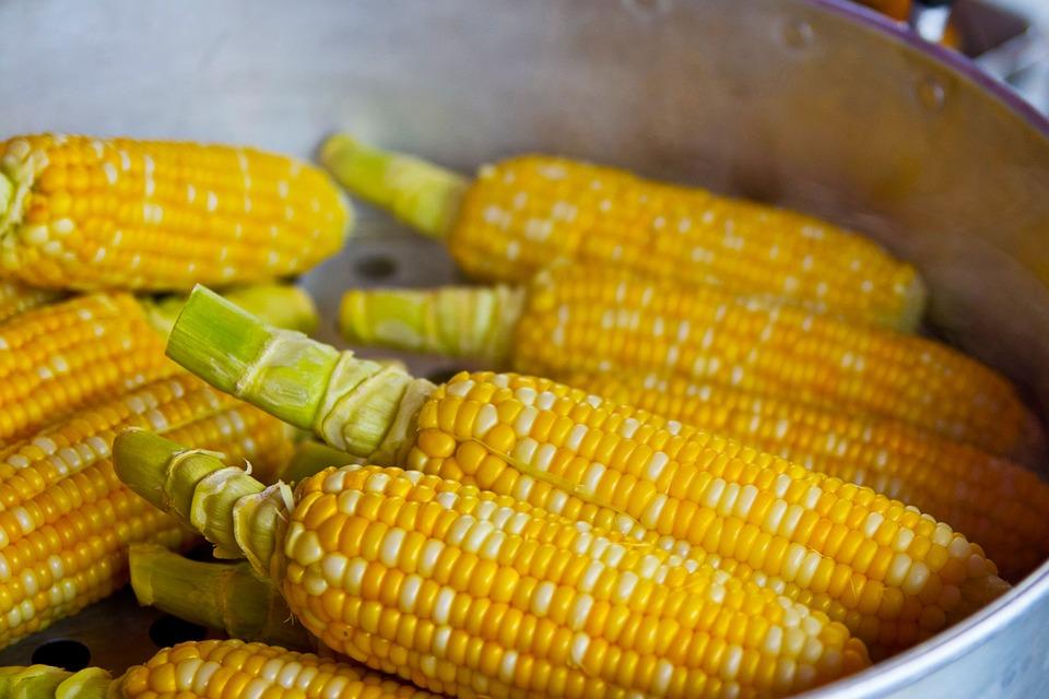 Кукуруза польза и вред для здоровья