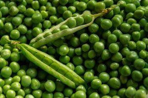 Зеленый горошек (горох) польза и вред