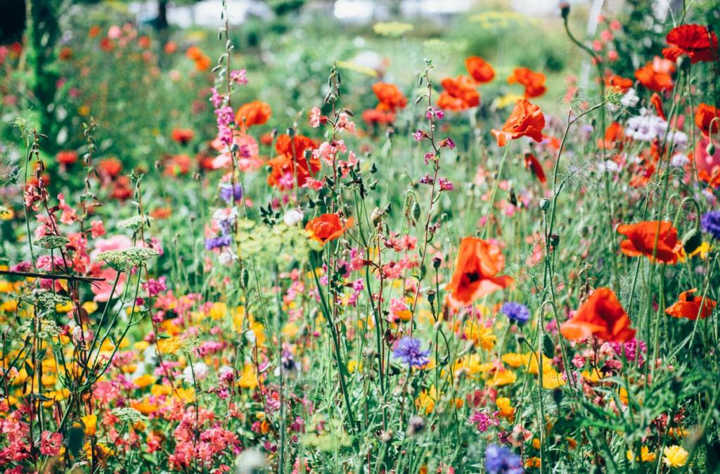 цветы употребляемые в пищу