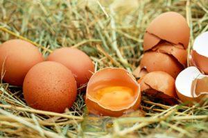 почему в курином яйце кровь