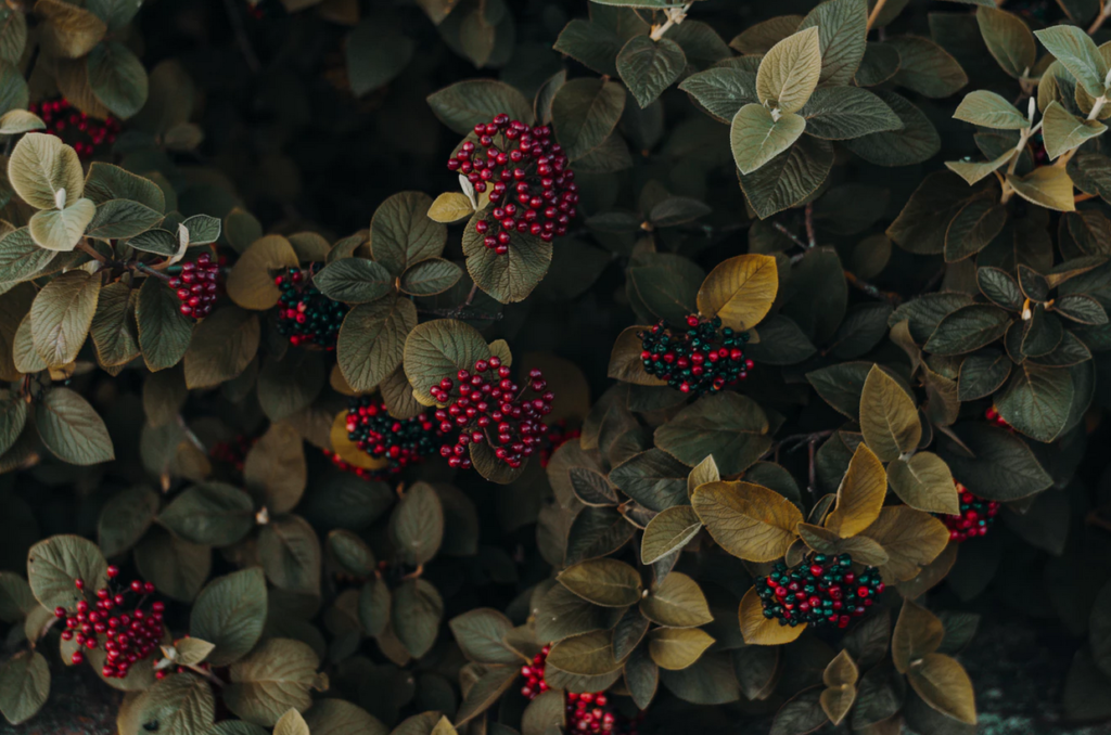 дикие ягоды в лесу